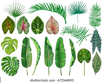 Set of tropical leaves. Jungle vector illustration. Vintage big collection of hand drawn botanical design elements isolated on white. Summer tropical design. Green palm leaves. Beautiful fashion art
