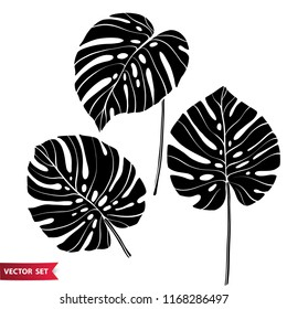 Set of tropical leaves. Monstera leaves collection. Jungle design elements.