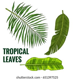 Set of tropical leaves, realistic colored hand drawn illustrations