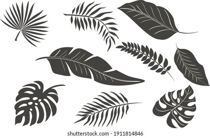 Set of tropical leaves in silhouettes. In gray color.Palm, monstera, banana tree. Vector bundle.