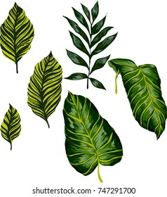 Set of tropical leaves. Vector.