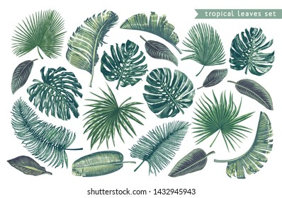 Set of tropical leaves for your design, posters, cards, prints for clothing, wallpaper, wrapping paper, wedding invitation, patterns, wallpapers, fabric. Exotic, isolated plants with high details.