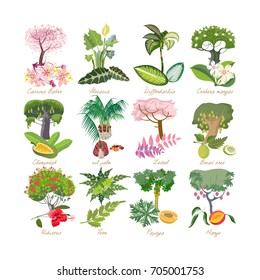 Set of tropical palm plants with leaves, flowers: alocasia, cassia baker, diffenbachia, cerbera mangas, oil palm, hibiscus, fern, zedrel, breadfruit, papaya, mango. Vector illustration isolated.