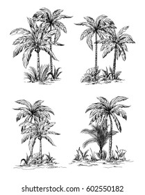 Set tropical palm trees with leaves, mature and young plants, black silhouettes isolated on white background. Sketch design.