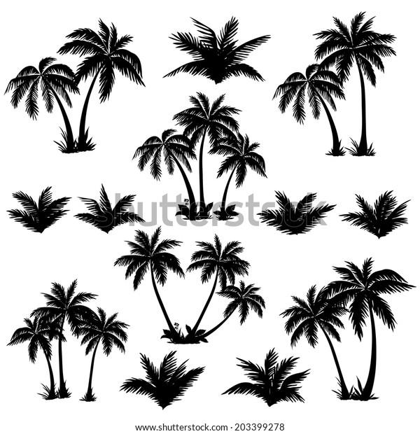 Установите тропические пальмы с листьями, зрелыми и молодыми растениями, черными силуэтами, изолированными на белом фоне. Вектор