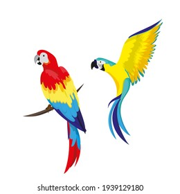 A set of tropical parrots. Parrots of various bright colors, in flight and sitting on a branch. Summer design element.
