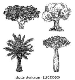 Set of tropical trees. Palm, baobab, scheffler tree and olive. Engraving style. Vector illustration.