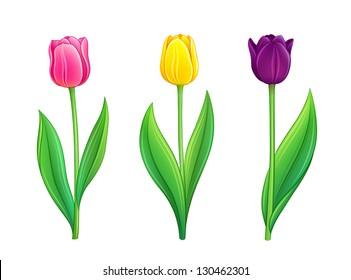 Set of tulips. Vector illustration in eps10 format