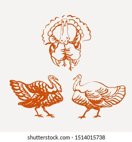 Set of turkey bird illustrations for Thanksgiving card, print, packaging. Freehand line drawing. Vintage style.
