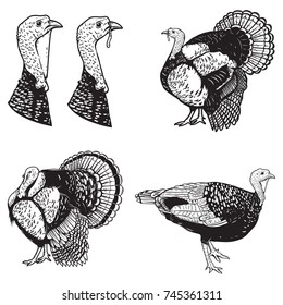 Set of turkey illustrations. Design elements for emblem, sign, poster, banner. Vector illustration