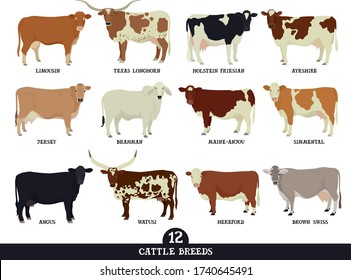 Set of twelve popular cattle breeds Flat vector illustrations Isolated objects Cattle breeding and stock raising Farming today set