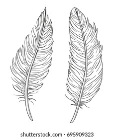 Set of two hand drawn vector decorative feathers isolated on white background