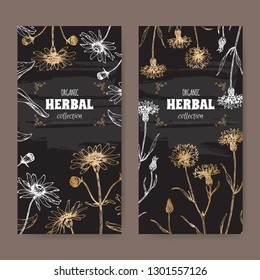 Set of two labels with Arnica montana aka or mountain arnica and Centaurea cyanus aka cornflower or bachelor button. Hadn drawn sketch. Herbal collection. Great for traditional medicine, or gardening.