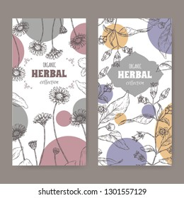 Set of two labels with Bellis perennis aka daisy and Atropa belladonna aka belladonna or deadly nightshade sketch. Hand drawn sketch. Herbal collection. Great for traditional medicine, or gardening.