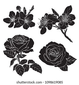 Set of two rose and two cherry silhouettes. Hand drawn vector