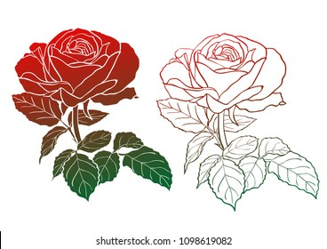 Set of two rose silhouettes - full and contour. Hand drawn vector