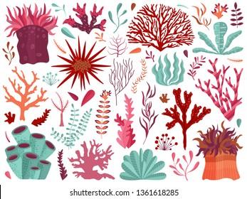 Set of underwater ocean coral reef plants, corals and anemones. Aquatic and aquarium seaweeds, tropical coral-reef elements. Marine algae, sea wildlife, sponges and seagrasses elements collection.
