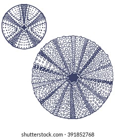 Set of Urchins. Collection of Sea Design Elements in Hand Drawn Graphic Style. Vector Illustration