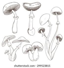 Set with a variety of vintage mushrooms. Retro hand drawn vector illustration