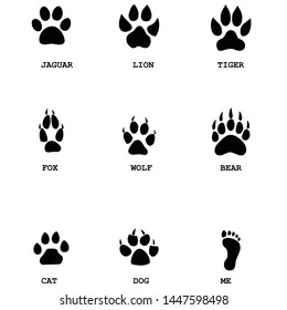 Set of various animal paw and footprints