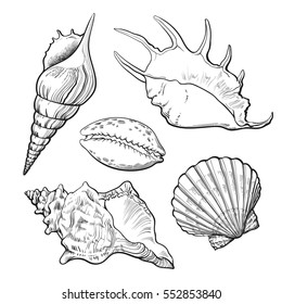 Set of various beautiful mollusk sea shells, sketch style illustration isolated on white background. Realistic hand drawing of seashells like conch, kauri, oyster, spiral, clam and mollusk shells