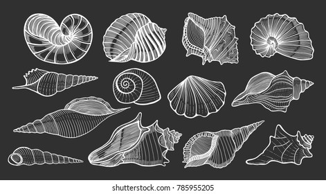 Set of various beautiful mollusk sea shells, sketch style illustration isolated on black background. Realistic hand drawing of seashells like conch, kauri, oyster, spiral, clam and mollusk shells