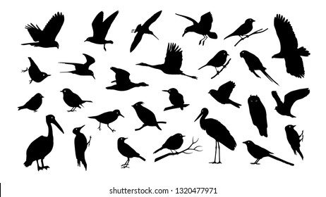 Set of various bird vector silhouettes isolated on white background