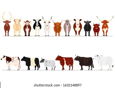 set of various cow border