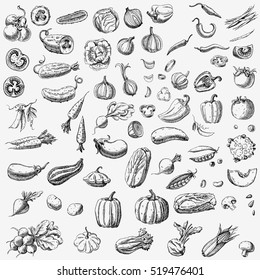 Set of various hand drawn vegetables. Sketches of different food. Isolated on white