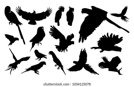 Set of Various Pose Parrot Silhouette vector illustration