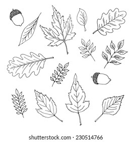 Set of various types of hand - drawn leaves