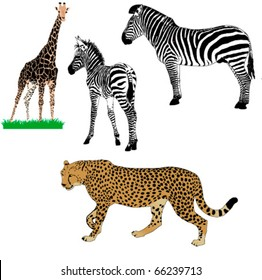 set of vector African animals : zebras, girafe, cheetah