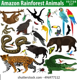 set of vector amazon rainforest jungle animals