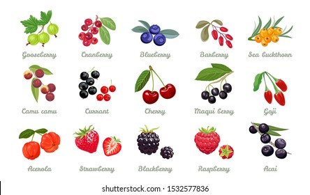 Set of vector berries isolated. Gooseberry,cranberry, blueberry, barberry, sea ​​buckthorn,camu camu, currant, cherry, maqui berry, goji, acerola, Strawberry, blackberry, raspberry, acai. Cartoon flat