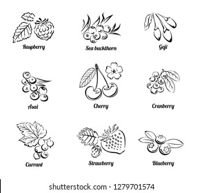 Set of vector berries isolated on white background. Сollection of simple black and white illustrations. Cherry, blueberry, raspberry, strawberry, cranberry, sea buckthorn, currant, acai, goji.