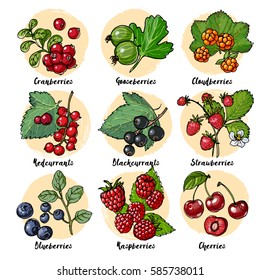 Set of vector berries and leaves. Wild berries painted color line on a white background. Cranberries, gooseberries, cloudberries, redcurrants, blackcurrants, strawberries, blueberries, raspberries