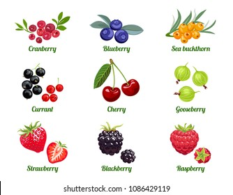 Set of vector berries. Raspberry, Blackberry, Strawberry, Gooseberry, Cherry, Currant, Sea buckthorn, Blueberry, Cranberry. Flat icons isolated on white background.