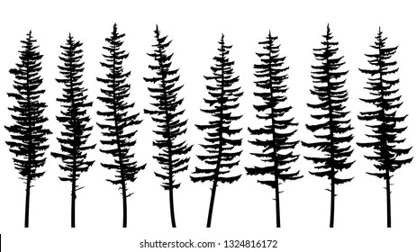 Set of vector black silhouettes of tall spruce trees with rare branches.