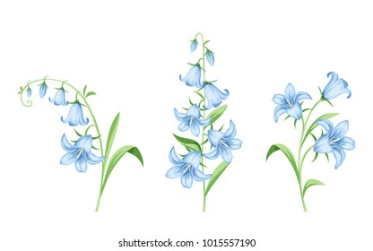 Set of vector blue bluebell flowers isolated on a white background.