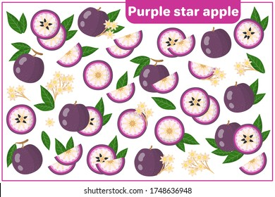 Set of vector cartoon illustrations with whole, half, cut slice Purple Star Apple exotic fruits, flowers and leaves isolated on white background