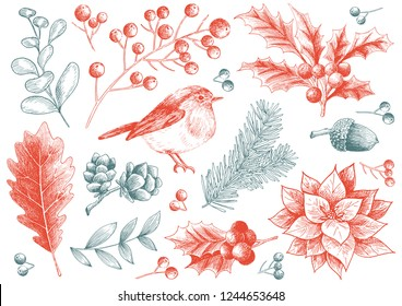 Set of vector Christmas decorations and plant. Hand drawing plants, mistletoe, robin bird, acorn, pine tree branch, Christmas poinsettia flower and red beans branch illustration.