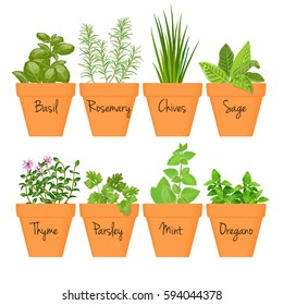 Set of vector culinary herbs in terracotta pots with labels. Green growing basil, sage, rosemary, chives, thyme, parsley, mint, oregano with text above. Gardening. For advertising, poster, banner, web
