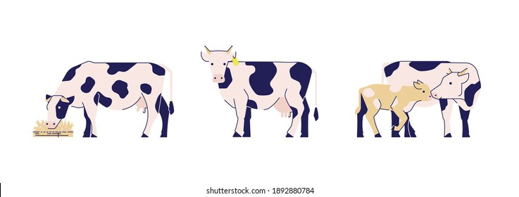 Set of vector cute stylised cows.  Modern colour illustration for your projects. Isolated elements for posters, websites, products.