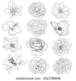 Set of vector drawing flowers, isolated floral elements, hand drawn botanical illustration