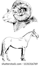 Set of vector drawings of different animals cat and mountain sheep, hand-drawn sketches, objects with no background