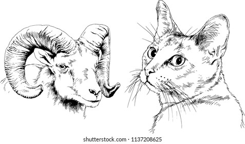 Set of vector drawings of different animals cat and sheep, hand-drawn sketches, objects with no background