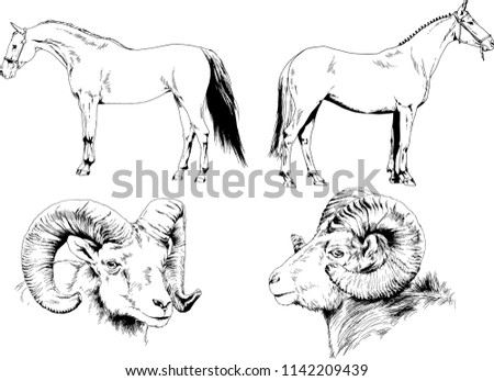 Set Vector Drawings Different Animals Horse Stock Vector Royalty