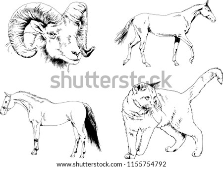 Set Vector Drawings Different Animals Cat Stock Vector Royalty Free