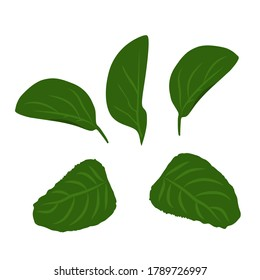 Set of vector drawings of green leaves on a white isolated background. Trees, bushes flat, cartoon for decoration.