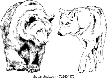 set of vector drawings on the theme of predators bears and wolves are drawn by hand with ink tattoo logos